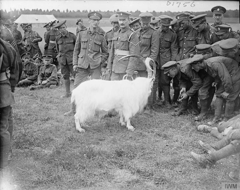 The white goat mascot of the 2nd Battalion, Royal Welsh Fusiliers, and soldier-spectators at the 33rd Division Horse Show at Cavillon, 18 July 1917. Imperial War Museum image Q5691