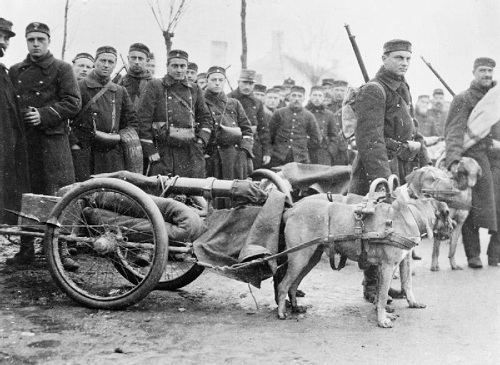 Belgian machine gunners with their dog-drawn gun carriages on the Western Front on 5 December 1914. Image Q 53452 from the Sport & General Press Agency collection held by the Imperial War Museum, with my thanks.